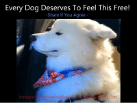 Internet, Memes, and 🤖: Every Dog Deserves To Feel This Free!  Share If You Agree  samoyedjazz  ons Com  instagram Jazz The Samoyed · instagram.com/samoyedjazz/ ↘ See The BEST Dog Videos on The Internet ↙ ❤ DoggieDiscussions.Com/videos/youll-never-believe ❤