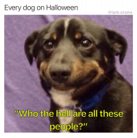 "Funny, Halloween, and Chocolate: Every dog on Halloween  @tank.sinatra  Who the hell are all these  people?""  dD Why are you giving them chocolate? Are you trying to kill them?"