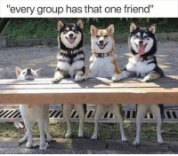 """Funny Animal Picture Dump Of The Day 23 Pics: """"every group has that one friend"""" Funny Animal Picture Dump Of The Day 23 Pics"""