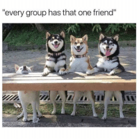 "Funny, Memes, and One: ""every group has that one friend"" SarcasmOnly"