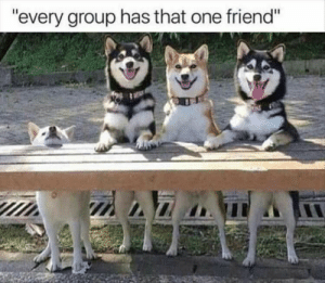 "We all have that one friend: ""every group has that one friend"" We all have that one friend"
