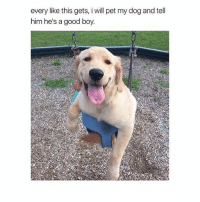 Love, Girl, and Good: every like this gets, i will pet my dog and tell  everylike this gets, vill pet my dog and tel  him he's a good boy RG: @peopleareamazing 💋 Tag someone who'd love this pooch 😍