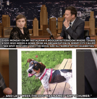 """Amy Schumer, Dogs, and Instagram: EVERY MONDAY ON MY INSTAGRAM IS #DOGDAYAFTERNOON""""WHERE I SHARE  ADOG WHO NEEDS A HOME FROM ANORGANIZATION IN JERSEY CITY CALLED  """"SEE SPOT RESCUED ANDTHEDOGS] ARE ALL NAMED AFTERCELEBRITIES.   #FALLONTONG  AND LAST WEEK-THEDOGWASİNAMED AMY(SCHUMER."""" <p><a href=""""http://www.nbc.com/the-tonight-show/segments/133641"""" target=""""_blank"""">Lena Dunham helps rescue dogs, and most of them have celebrity names&hellip;</a></p><p>[ <a href=""""https://www.youtube.com/watch?v=bCGVMkdSyeg&amp;index=2&amp;list=UU8-Th83bH_thdKZDJCrn88g"""" target=""""_blank"""">Part 2</a>/ <a href=""""http://www.nbc.com/the-tonight-show/segments/133636"""" target=""""_blank"""">Part 3</a> ]</p>"""