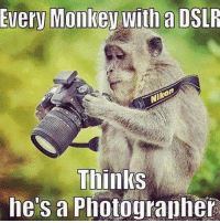Monkey: Every Monkey with a DSLR  Thinks  he's a Photographer