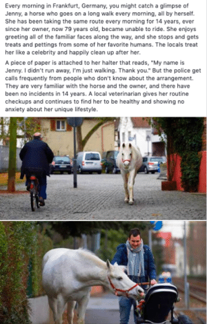"Jenny is the best horse ever. Be more like Jenny.: Every morning in Frankfurt, Germany, you might catch a glimpse of  Jenny, a horse who goes on a long walk every morning, all by herself.  She has been taking the same route every morning for 14 years, ever  since her owner, now 79 years old, became unable to ride. She enjoys  greeting all of the familiar faces along the way, and she stops and gets  treats and pettings from some of her favorite humans. The locals treat  her like a celebrity and happily clean up after her.  A piece of paper is attached to her halter that reads, ""My name is  Jenny. I didn't run away, I'm just walking. Thank you."" But the police get  calls frequently from people who don't know about the arrangement.  They are very familiar with the horse and the owner, and there have  been no incidents in 14 years. A local veterinarian gives her routine  checkups and continues to find her to be healthy and showing no  anxiety about her unique lifestyle. Jenny is the best horse ever. Be more like Jenny."
