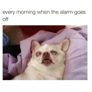 Alarm, Morning, and Off: every morning when the alarm goes  off