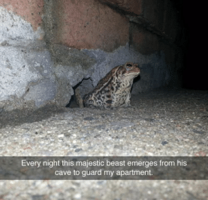 wholesomepetmemes: support👏our👏troops👏 : Every night this majestic beast emerges from his  cave to guard my apartment. wholesomepetmemes: support👏our👏troops👏