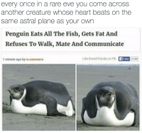 Bored Panda: every once in a rare eve you come acros:s  another creature whose heart beats on the  same astral plane as your own  Penguin Eats All The Fish, Gets Fat And  Refuses To Walk, Mate And Communicate  1 minute ago by OLANDGUNICH  Like Bored Panda on FB  46M]