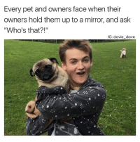 "Memes, Snapchat, and Good: Every pet and owners face when their  owners hold them up to a mirror, and ask  Who's that?!  IG: davie dave Joffrey: ""who's a good boy? You are! Yes, you are!"" Dog: 🙄duh . . . . . youreannoying putmedown . . . 👉 Snapchat : TheSlothYodeler 👈"