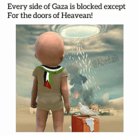 Memes, Videos, and Bear: Every side of Gaza is blocked except  For the doors of Heavean!  @Abedali May Allah protect our brothers and sisters in Palestine and all over the world We cannot bear just looking at the pictures and videos coming from Masjid Al Aqsa Imagine the reality on the ground. Unbearable, unthinkable, unacceptable. prayforpalestine ▃▃▃▃▃▃▃▃▃▃▃▃▃▃▃▃▃▃▃▃ @abed.alii 📝