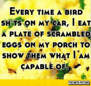 srsfunny:Don't Mess With Me: EVERY TIME A BIRD  SH TS ON MY GAR, I EAT  A PLATE OF SCRAMBLED  EGGS ON MY PORCH TO  SHOW,THEM WHAT I AM  CAPABLEOF  THE META PICTURE srsfunny:Don't Mess With Me