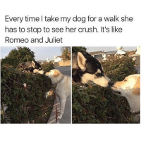 Double tap for puppy love 💕: Every time take my dog for a walk she  has to stop to see her crush. It's like  Romeo and Juliet Double tap for puppy love 💕