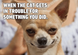 Every week we have fresh hot doggo memes delivered straight to your face and to your heart (insert loud 'aww' sound here.) #dogs #funnydogs #dogmemes #animalmemes #cutedogs: Every week we have fresh hot doggo memes delivered straight to your face and to your heart (insert loud 'aww' sound here.) #dogs #funnydogs #dogmemes #animalmemes #cutedogs