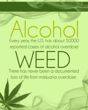 Life, Weed, and Alcohol: Every year, the US. has about 50000  reported cases of alcohol overdose  WEED  There has never been a documented  loss of life from marijuana overdose The Truth