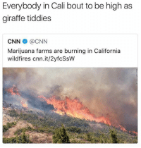cnn.com, Family, and California: Everybody in Cali bout to be high as  giraffe tiddies  CNN @CNN  Marijuana farms are burning in California  wildfires cnn.it/2yfcSsW my family lives near ther