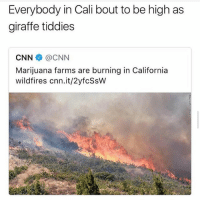 cnn.com, Facts, and Memes: Everybody in Cali bout to be high as  giraffe tiddies  CNN@CNN  Mariiuana farms are bur  wildfires cnn.it/2yfcSsW  ning in California Lmfao facts