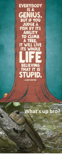 Albert Einstein, Life, and Einstein: EVERYBODY  IS A  GENIUS.  BUT IF YOU  JUDGE A  FISH BY ITS  ABILITY  TO CLIMB  A TREE,  IT WILL LIVE  ITS WHOLE  LIFE  BELIEVING  THAT IT is  STUPID.  -ALBERT EINSTEIN  What's up bro? <p>Everybody Is A Genius, Even The Little Fish.</p>