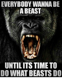 Funny, Love, and Memes: EVERYBODY WANNA BE  A BEAST  UNTILITS TIME TO  DO WHAT BEASTS DO .. 💥💥💥💥💥💥💥 . .. 😡😡😡😡. 💥💥💥💥💥💥💥 FOLLOW US . ⬇️⬇️⬇️⬇️⬇️⬇️⬇️⬇️⬇️⬇️⬇️⬇️ 🔥🔥@bodybuilding_humour 🔥🔥 ⬆️⬆️⬆️⬆️⬆️⬆️⬆️⬆️⬆️⬆️⬆️⬆️ ... workout bodybuilding gymmemes crossfit strong motivation instalike powerlifting Quote quotes gymhumour deadlift squat bench love gymhumour funny joke legday instagood fitspo motivation girlswholift fitchick mma conormcgregor