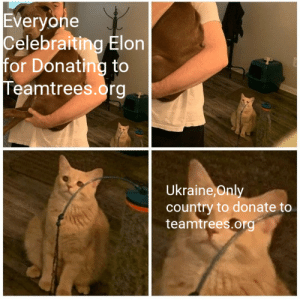 it aint much,but its honest work: Everyone  Celebraiting Elon  for Donating to  Teamtrees.org  Ukraine, Only  country to donate to  teamtrees.org it aint much,but its honest work