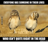 I don't have that friend... Wait, does it mean it's me? http://9gag.com/gag/awV36QB?ref=fbp: EVERYONE HAS SOMEONE IN THEIR LIVES  WHO ISN'T QUITERIGHTIN THE HEAD  MEMEFUL COM I don't have that friend... Wait, does it mean it's me? http://9gag.com/gag/awV36QB?ref=fbp