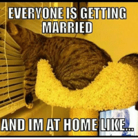Just chillin' single singlelife singleproblems foreveralone: EVERYONE IS GETTING  MARRIED  ANDI MAT HOME LIKE Just chillin' single singlelife singleproblems foreveralone