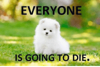 Top Very Funny Animals Memes: EVERYONE  IS GOING TO DIE Top Very Funny Animals Memes