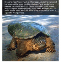 I laughed too hard at this 😂: Everyone meet Frank. Frank is 40lb snapping turtle that wandered  into a community where he did not belong. Frank needed to be  escorted back to his local pond where he couldn't go all snappity  snap on anyone (or cute puppies) so my friend and I jumped into  action. Within about 2 minutes it was pretty apparent that Frank is  a gigantic f*king ahole. I laughed too hard at this 😂