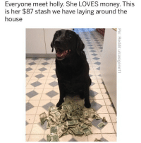Memes, Money, and House: Everyone meet holly. She LOVES money. This  is her $87 stash we have laying around the  house  5 I tell all my pups: rake it up. Bark it down. (Poopy) bag it up. Pup it up, pup it up. Pup it up, pup it up iReallyNeedToPursueThisRapTingTho 😩😂😂😂
