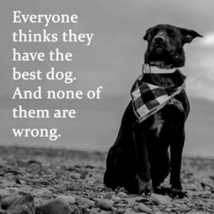 Best, Dog, and Don: Everyone  thinks they  have the  best dog.  And none of  them are  Wrong. And we don't deserve them!