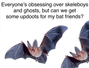 A new contender! via /r/memes https://ift.tt/2pFaSXl: Everyone's obsessing over skeleboys  and ghosts, but can we get  some updoots for my bat friends? A new contender! via /r/memes https://ift.tt/2pFaSXl