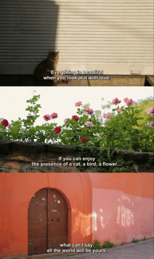 Love, Tumblr, and Blog: Everything is beautifu  when you look at it with love   If you can enjoy  the presence of a cat, a bird, a flower.   what can l say,  all the world will be yours shittowatch: Kedi (2016)