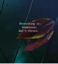 Stress, Everything, and  Dont: Everything is  temporary,  don't stress.