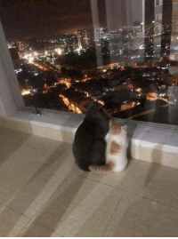 Light, Simba, and Everything: Everything the light touches is ours Simba