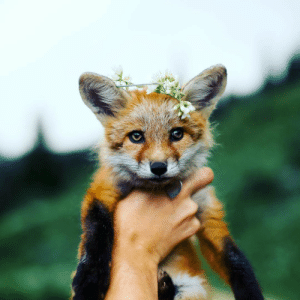 everythingfox:  Bow down to your new leader: everythingfox:  Bow down to your new leader