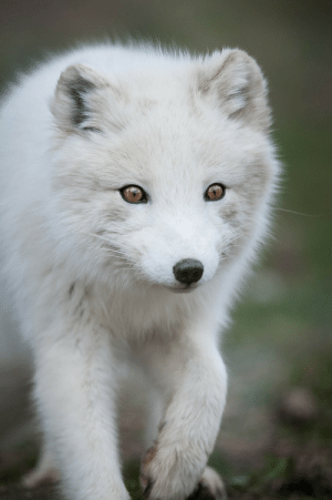 Target, Tumblr, and Blog: everythingfox:  Pure and good  Justin Lo Photography