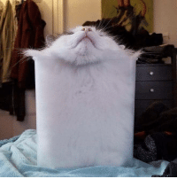 Tumblr, Blog, and Cat: everythingfox:  Tub of cat
