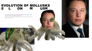 Brains, Evolution, and Giant: EVOLUTION OF MOLLUSKS  E L ON MUSK  Science Says: Octopus Brains are Something More Than Human .  https://www.tor.com/2015/12/04/octopi-giant-brains  Dec 4,2015- When it comes to determining how smart octopi are, you don't really need to go further  than this video of an octopus  oShift lored ELON MUSK INTELLIGENCE EXPOSED