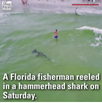 Memes, Shark, and Beach: EWS  A Florida fisherman reeled  in a hammerhead shark on  Saturday rp @foxnews - Watch: A fisherman reeled in a massive hammerhead shark off Florida's Panama City Beach. The fisherman later released the shark back into the ocean. @pmwhiphop