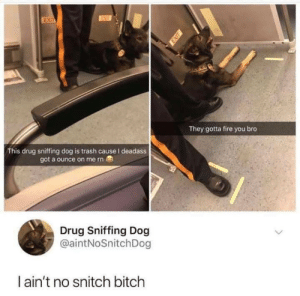 Bitch, Fire, and Snitch: ex  They gotta fire you bro  This drug sniffing dog is trash cause I deadass  got a ounce on me rn  Drug Sniffing Dog  @aintNoSnitchDog  I ain't no snitch bitch Good boy