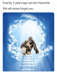 Funny, Lost, and Never: Exactly 2 years ago we lost Harambe  We will never forget you. RIP