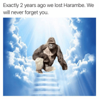 Funny, Instagram, and Meme: Exactly 2 years ago we lost Harambe. We  will never forget you. @pubity was voted 'best meme account on Instagram' 😂