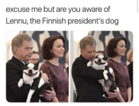 look at that smiley boi!: excuse me but are you aware of  Lennu, the Finnish president's dog look at that smiley boi!