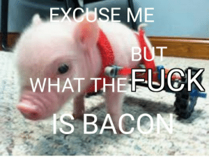 *oinks in paraplegic*: EXCUSE ME  BUT  WHAT THEFUCK  IS BACON *oinks in paraplegic*