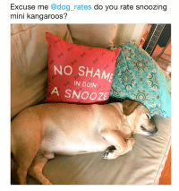 Cute, Funny, and Memes: Excuse me @dog_rates do you rate snoozing  mini kangaroos?  NO SHAME  IN DOIN'  A SNOOZE  ワ  ワ 42 Cute Animal Memes That Never Stop Being Funny