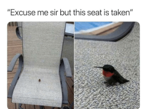 "mah seat: ""Excuse me sir but this seat is taken"" mah seat"