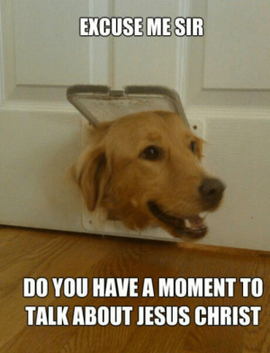 Funny Dog Memes I Top 50 of All Time I World Wide Interweb: EXCUSE ME SIR  DO YOU HAVE A MOMENT TO  TALK ABOUT JESUS CHRIST Funny Dog Memes I Top 50 of All Time I World Wide Interweb