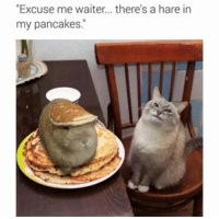 """funny Excuse me...: """"Excuse me waiter... there's a hare in  my pancakes. funny Excuse me..."""