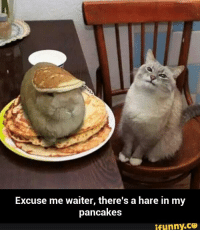 pancake: Excuse me waiter, there's a hare in my  pancakes  ifunny.CP
