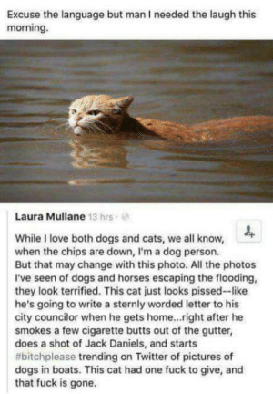 Im dying: Excuse the language but man I needed the laugh this  morning.  Laura Mullane 13 hrs  While I love both dogs and cats, we all know,  when the chips are down, I'm a dog person.  But that may change with this photo. All the photos  I've seen of dogs and horses escaping the flooding,  they look terrified. This cat just looks pissed--like  he's going to write a sternly worded letter to his  city councilor when he gets home..right after he  smokes a few cigarette butts out of the gutter,  does a shot of Jack Daniels, and starts  #bitchplease trending on Twitter of pictures of  dogs in boats. This cat had one fuck to give, and  that fuck is gone. Im dying