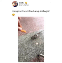 Most terrifying thing I've ever seen: exodias  @rarestofall  dawg i will never feed a squirrel again Most terrifying thing I've ever seen